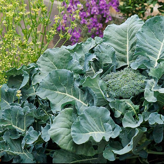 If you've never had a fall vegetable garden, you're missing a real treat. These11 helpful tips areall you need to know to plan, plant, and enjoy the harvest from a fall vegetable garden in your yard.