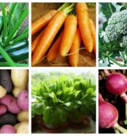 The 14 Easiest Vegetables To Grow