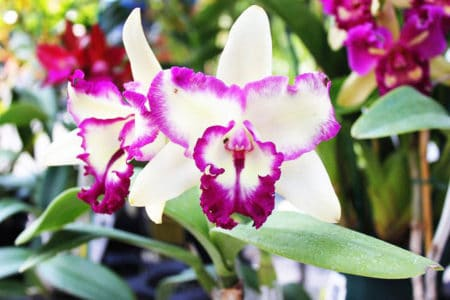 homemade orchid fertilizers