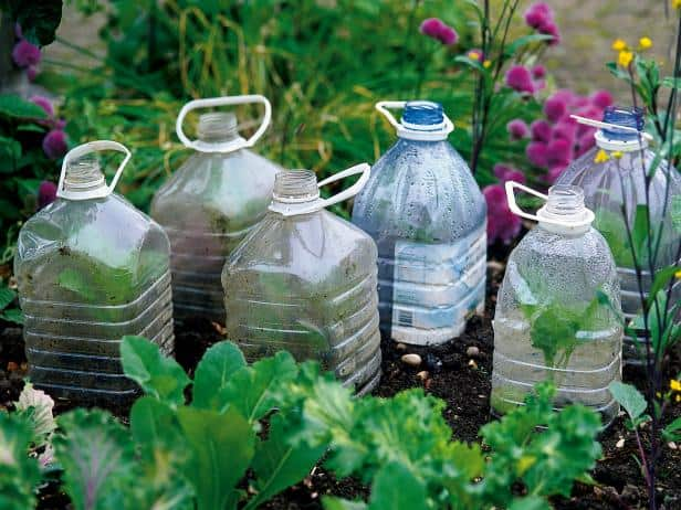 Cloches and Cold Frames - fall gardening tips
