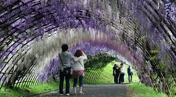 Kawachi Fujien Wisteria Garden, Japan - unique travel destinations