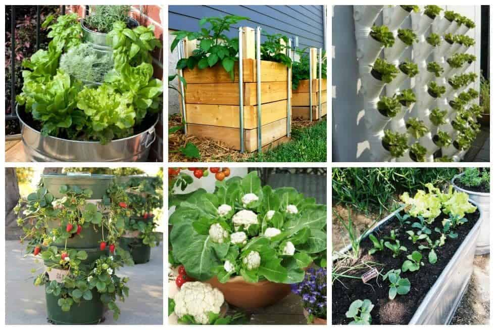 10 Easy Container Vegetable Garden Ideas for Your Yard - Ideal Me