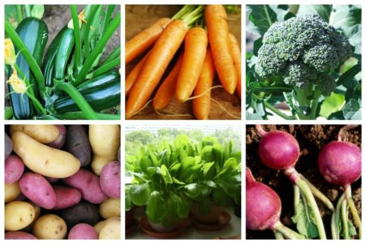 While looking for organic, pesticide-free ones is next to impossible – the only safe way to ensure you are getting the best produce for you and your family is to grow some yourself. The easiest vegetables to grow should be a nice place to start.