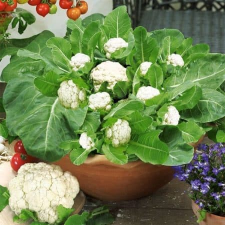 Enjoy tasty, homegrown vegetables on your doorstep, deck, patio, balcony, or garden with these 10 easy container vegetable garden ideas.