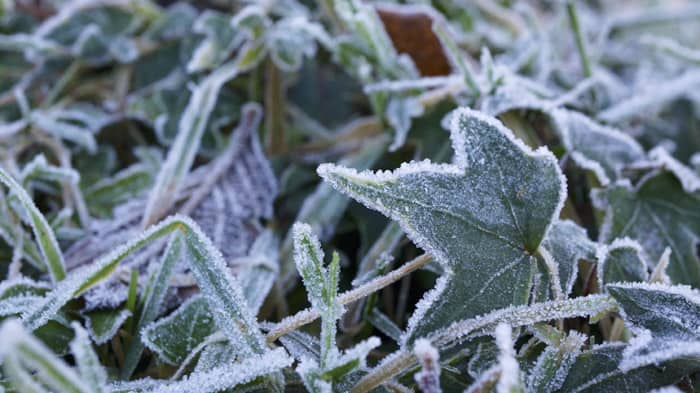 Frost - fall gardening tips