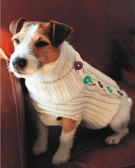 fe1dac493a1ff2 Here are some adorable knitting patterns to keep your furry friends warm.  Find the perfect