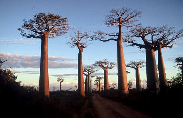 Madagascar, East Africa - unique travel destinations