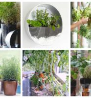 8 Easy Indoor Vegetable Gardens